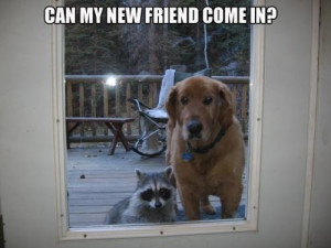 can my new friend come in, animal friendships