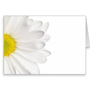 White Daisy Flower Background Customized Daisies Greeting Cards
