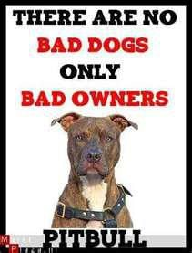 Famous Quotes About Pit Bulls Pit Bull Rescue Quotes...
