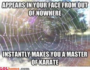 Ninja spider web