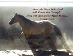 Scripture & Horses