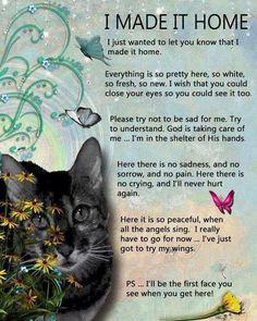 more loss of a pet quotes cat cat loss pets memories pets loss cat ...