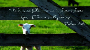 Pleasant Places - sheep, grass, god, jesus, bible verses, bible, holy ...