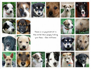 Inspirational Animal Rescue Quotes Humane animal rescue team: