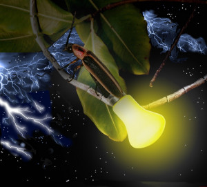 ... is the difference between a lightning bug and lightning.