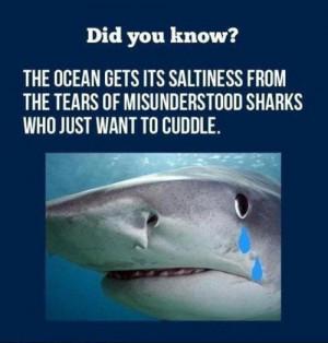 funny shark week tears cuddle
