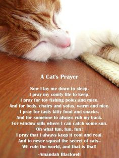 cat's prayer More