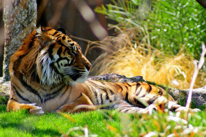 Endangered Animals For Kids