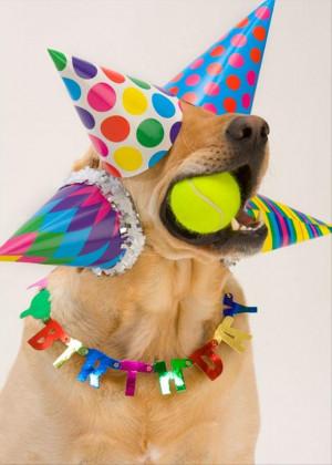 funny birthday parties