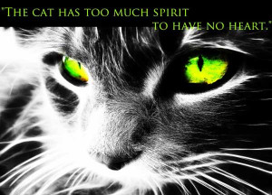 Cat Quotes Tumblr Cat quotes and sayings :