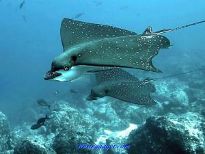 108108d1339138283-sea-creatures-wallpaper-sea-creatures-photos.jpg