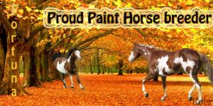 Paint Horse Quotes http://www.revolutionmyspace.com/image-code-9/paint ...