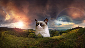Grumpy Cat Quotes Christmas Wallpaper Funny Grumpy Cat Images Hd ...