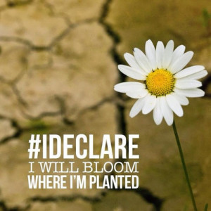 declare I will bloom where Im planted