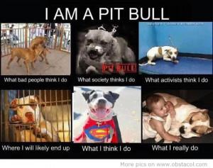 National Pit Bull Awareness Post
