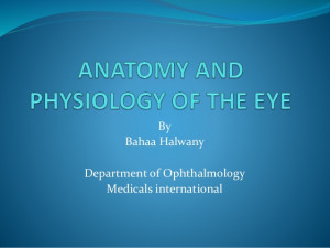 anatomy and physiology of the eye powerpoint