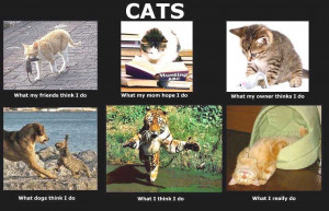 Cats-Inspirational-Life-Quotes by Ashry42