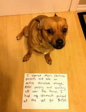 funny-picture-dog-shaming-christmas