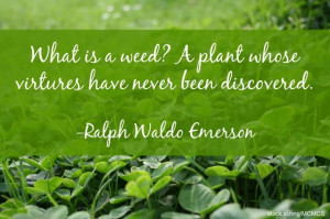 What is a weed? A weed is a plant whose virtues have not yet been ...