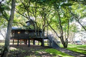 Most Amazing Tree Houses