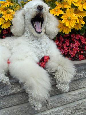 Funny Yawning
