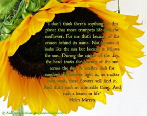 Sunflower Quotes Tumblr