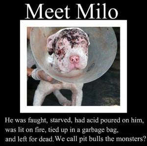 sad - against-animal-cruelty Photo