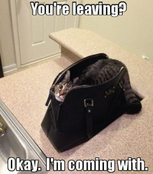 Funny cat in a bag