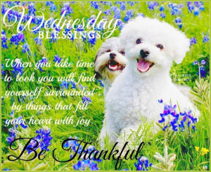 Wednesday Blessings Be Thankful