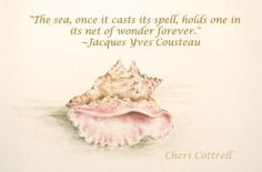 seashell quote monday lifeatkettlecove.com More
