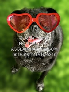 Stock Photos of Funny Animals - Dog Wearing Heart Shaped Glasses ...