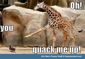 duck giraffe animal meme funny pics pictures pic picture image photo ...