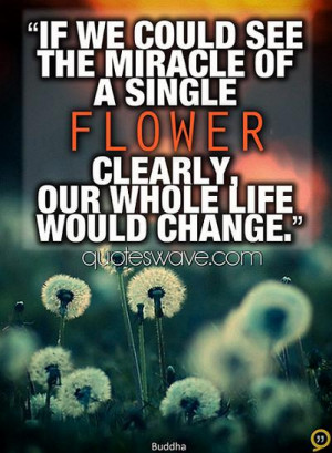 ... the miracle of a single flower clearly, our whole life would change