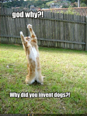 jokes funny sayings about dogs 3 responses to dog stuck in trees funny ...
