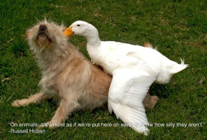 ... me-up? Check out these 25 Inspiring Quotes For People Who Love Animals