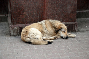 The Dangers of Stray Dogs, Must Read