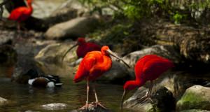 red bird snow