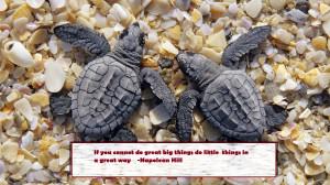 turtle_quotes_2.jpg
