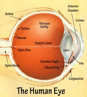 Glossary of Eye Terms
