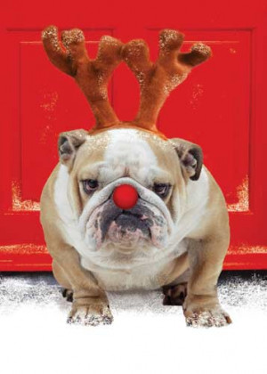 Christmas Holiday Gift Ideas for Your Pet Cat, Dog, Bird, Fish or ...