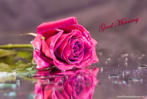 Touching Good Morning Love Images with Flowers