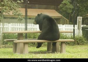 Quotes by yogi bear
