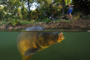 ... carp and his brother at a small lake near Montpellier in southern
