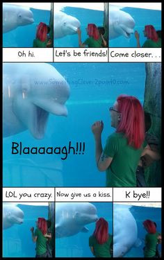 Cute Beluga Whales Something clever 2.0: a funny