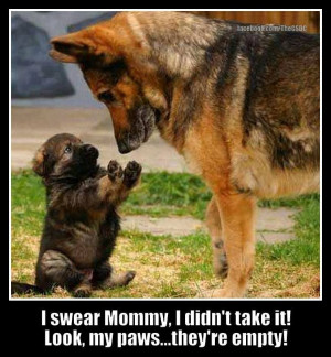 cute german shepard puppy and funny german shepherd with captions