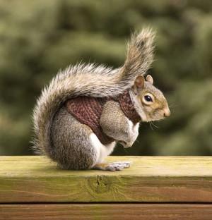 Funny Squirrel (27)