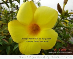 Single Flower Can Be My Garden