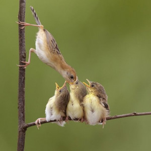 This busy mother bird needs help keeping the little ones fed, doesn't ...
