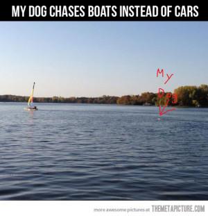 Funny photos funny dog chasing car boat