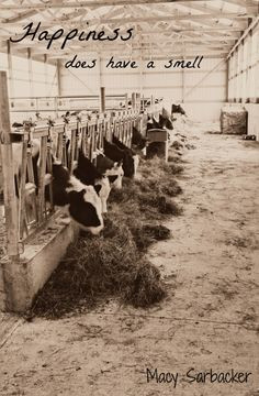 ... cows more dairy farms quotes memories farms quotes agriculture dairy